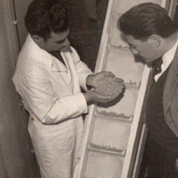 Anni 70. Pasta sul nastro trasportatore.